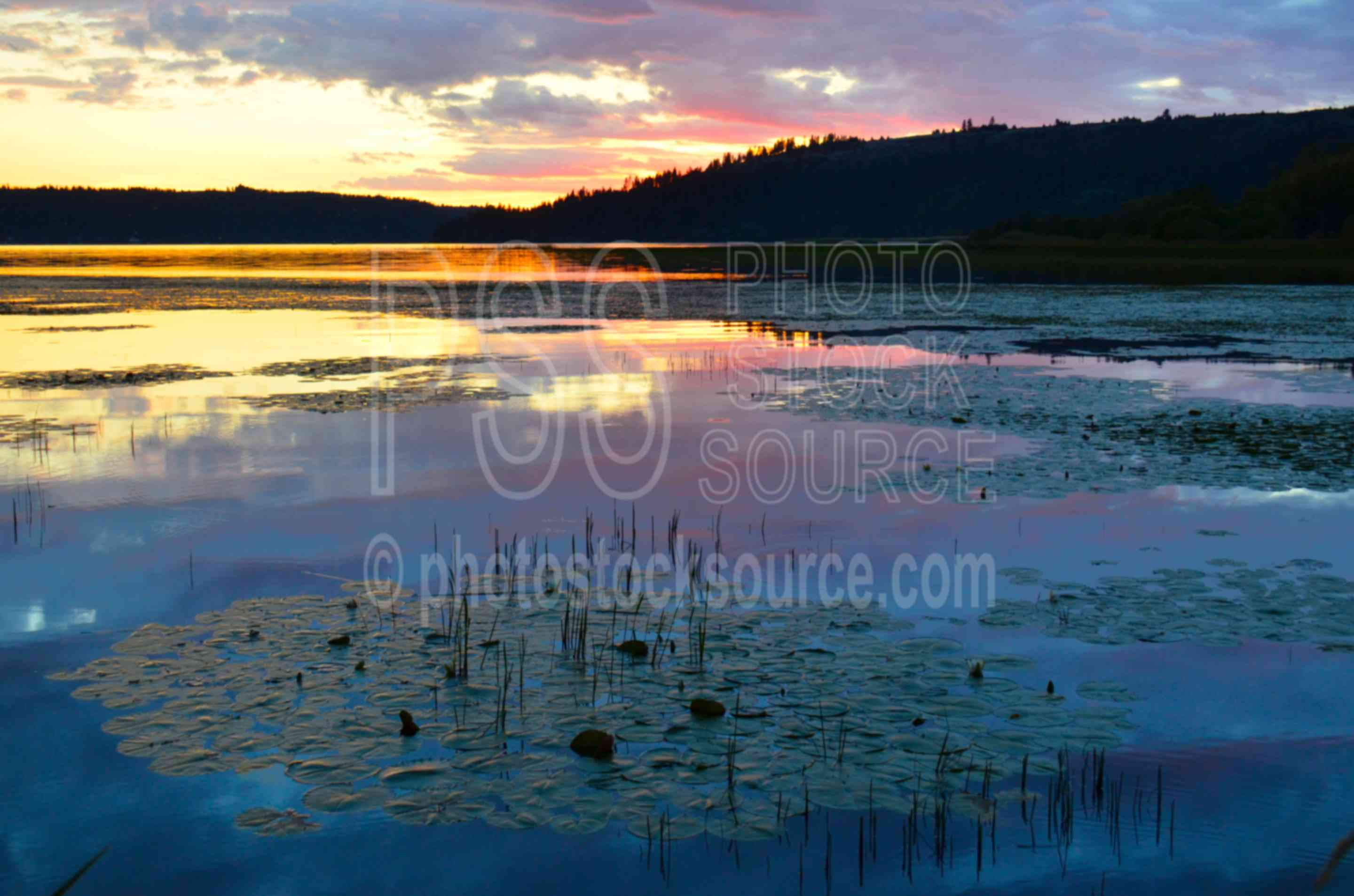 Lake Coeur d'Alene Sunset,plant,green,aquatic,water,lake,lily,bulrush,sunset