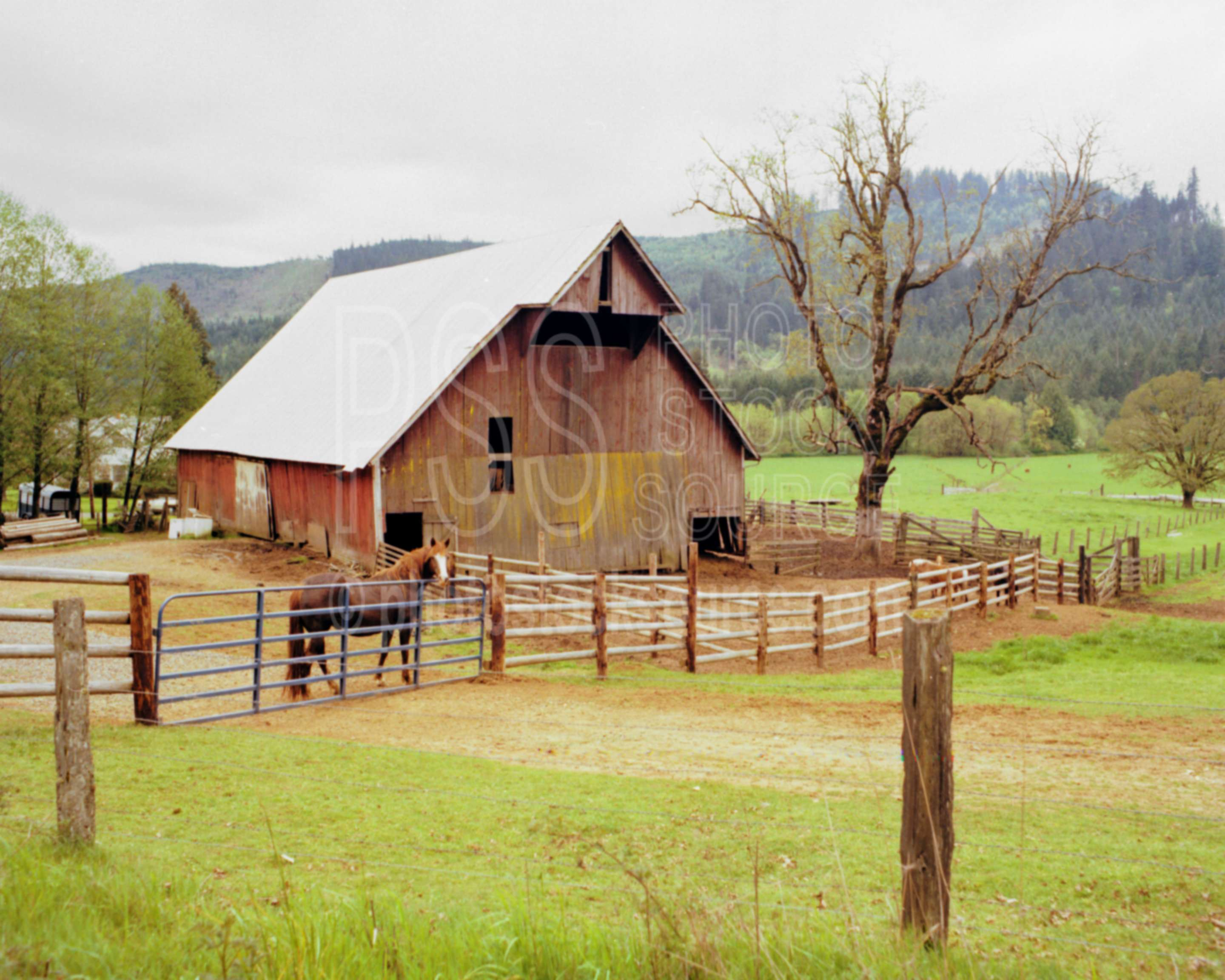 Photo of horse and barn by photo stock source farm noti for Barn builders oregon