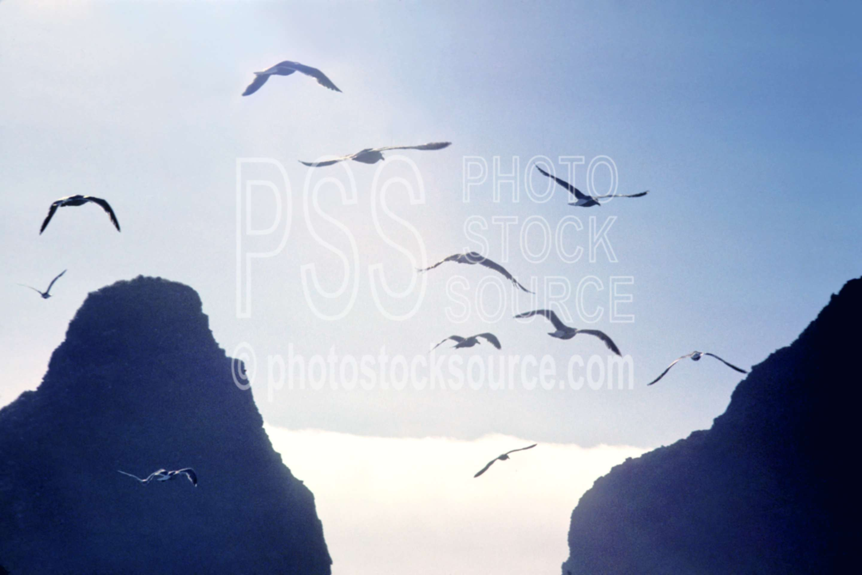Seagulls and Seastacks,heceta head,seagull,flying,seastack,usas,nature,seascapes,coast