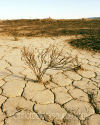 Photo of Parched Earth