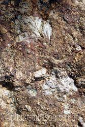 Leaf Fossils at Clarno Unit