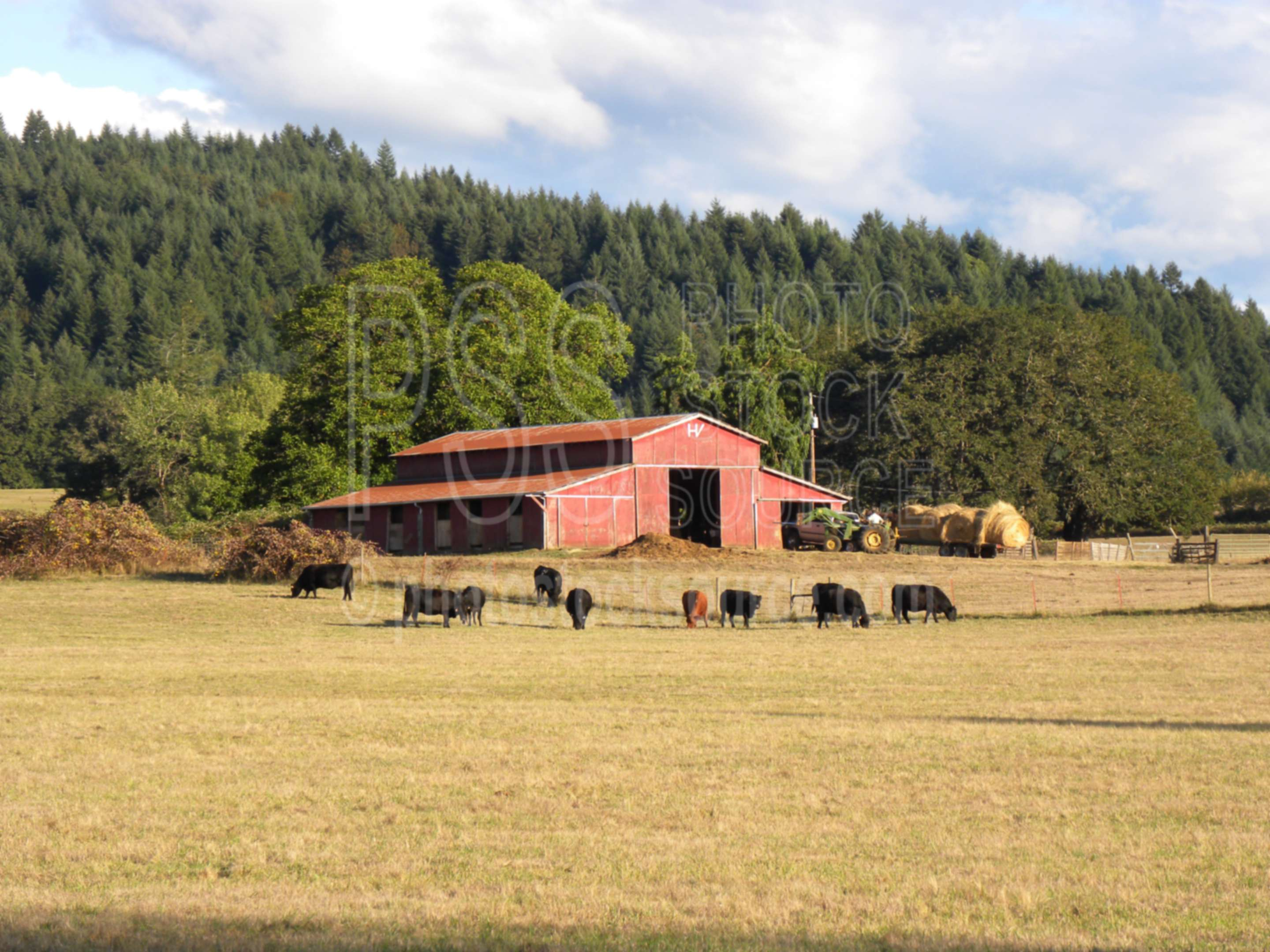 Red Barn and Cows,hay,tractor,farmer,cows,haying,farms