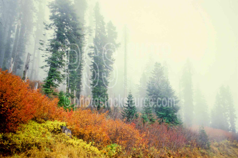 Autumn Fog,fall color,fogs,sourgrass mt.,usas,autumn,nature,mountains