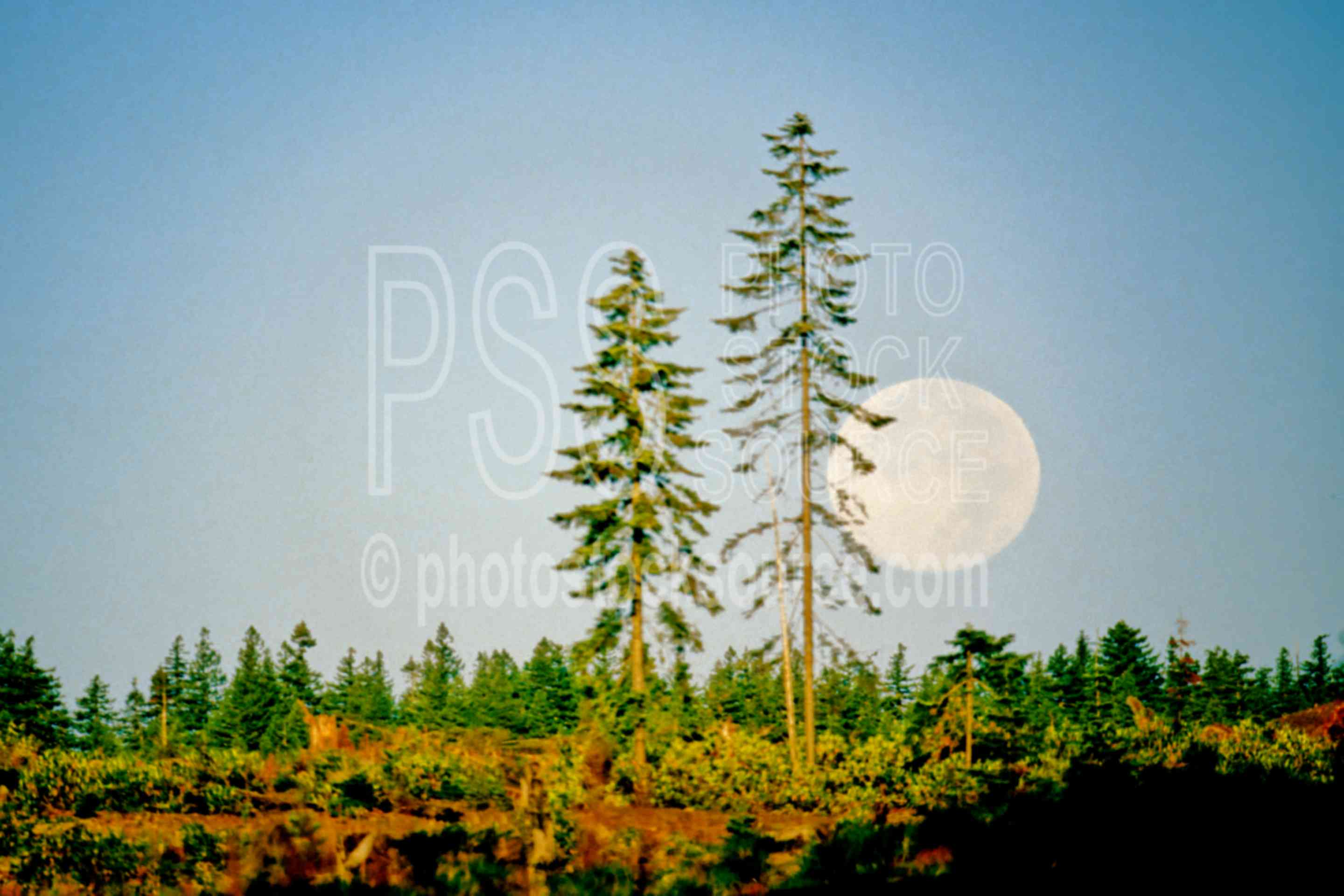 Moonset,moon,tree,usas,nature,mountains