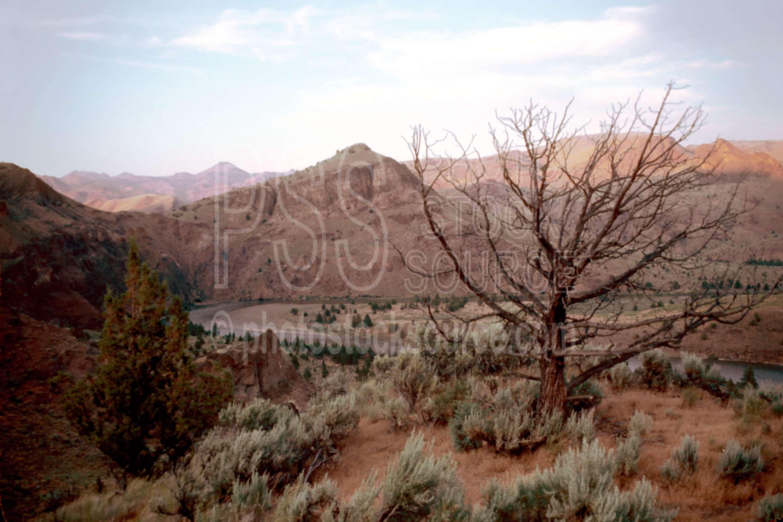 John Day River,gorge,juniper,usas,lakes rivers