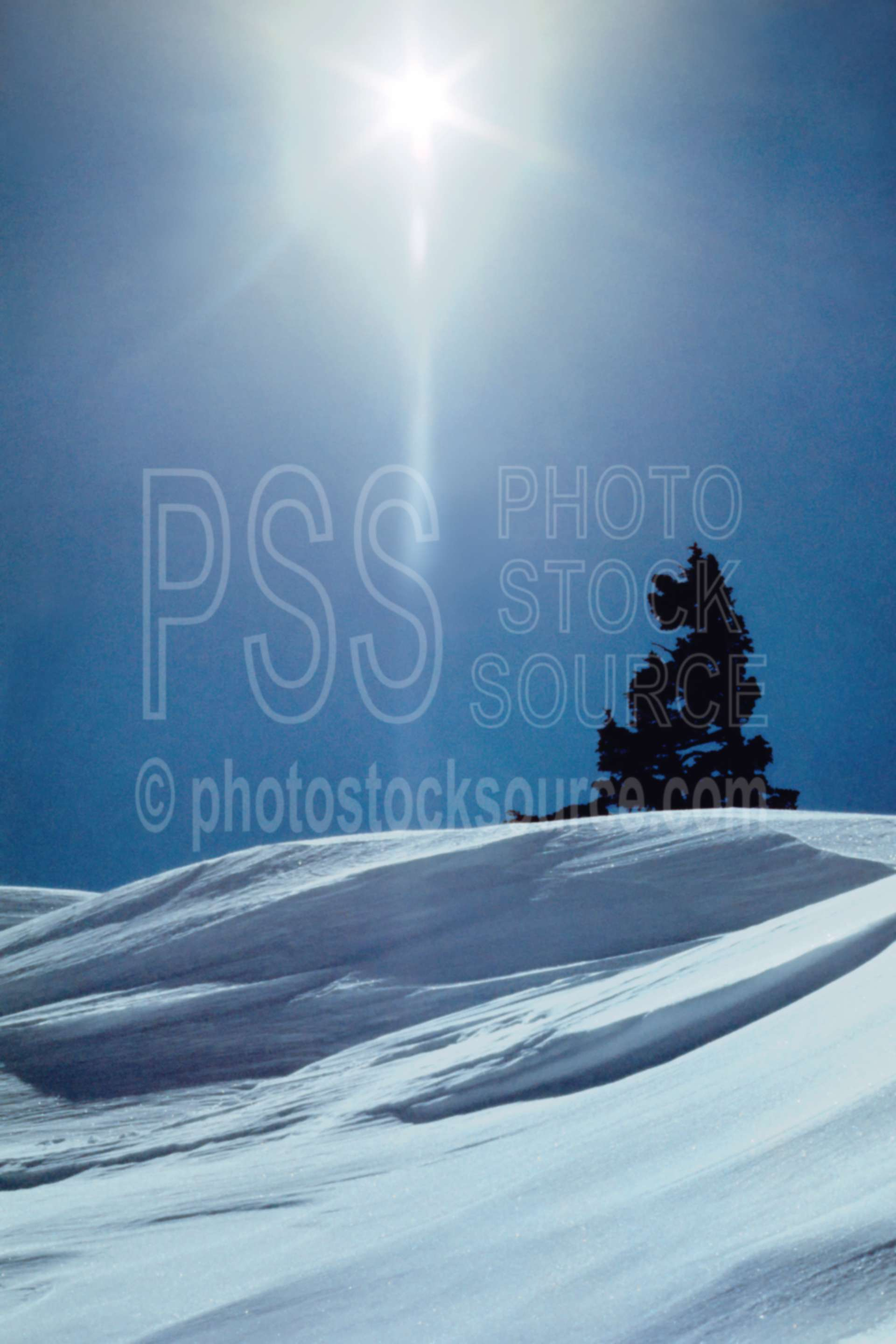 Sun and Tree,tree,winter,season,abstract,usas