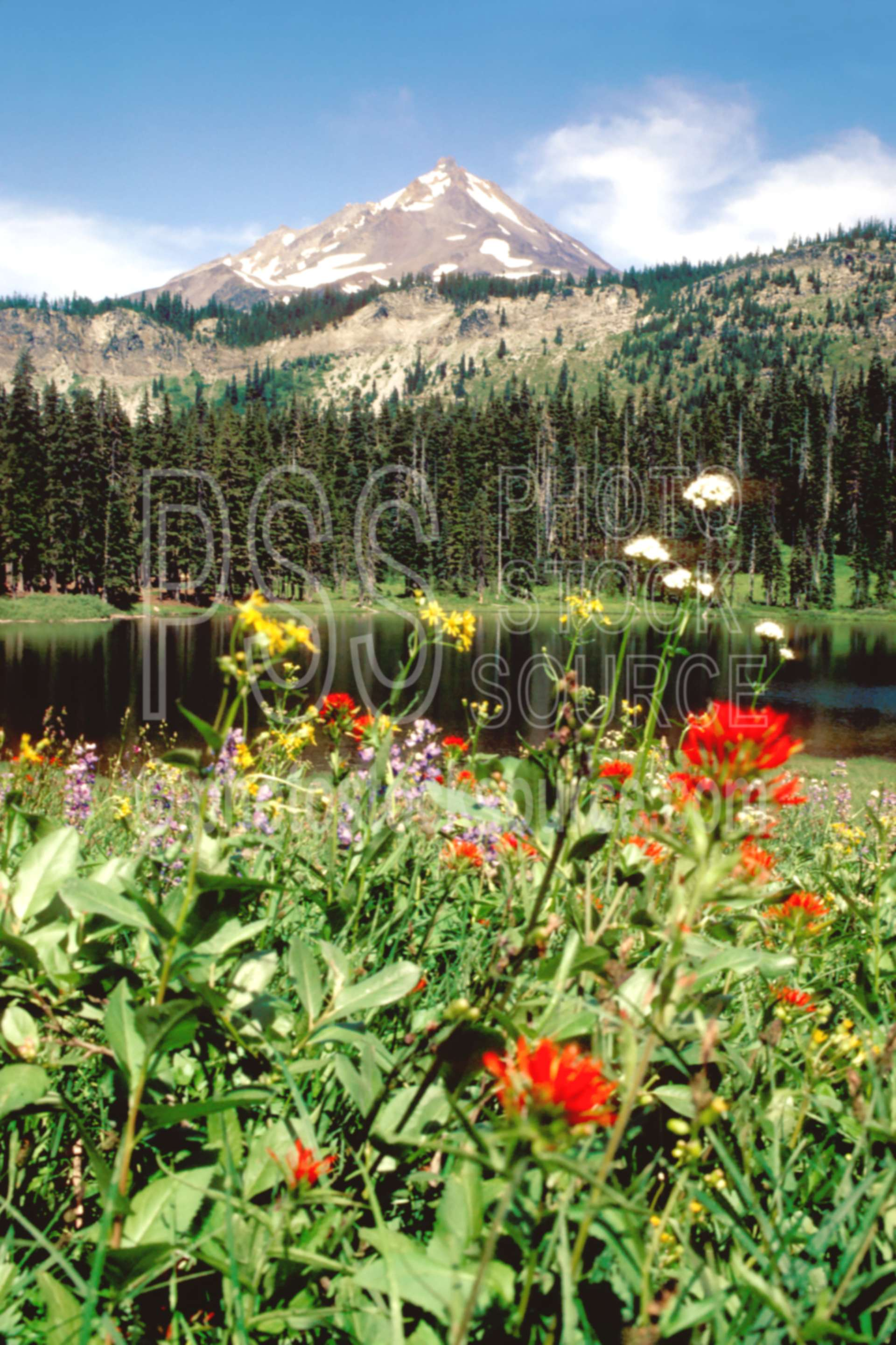 Mt. Jefferson Hanks Lake,flower,hanks lake,mt. jefferson,wildflower,mount,plant,usas,lakes rivers,mountains,plants