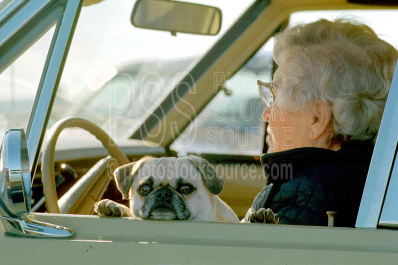 Lady and Dog,dogs,lady,usas
