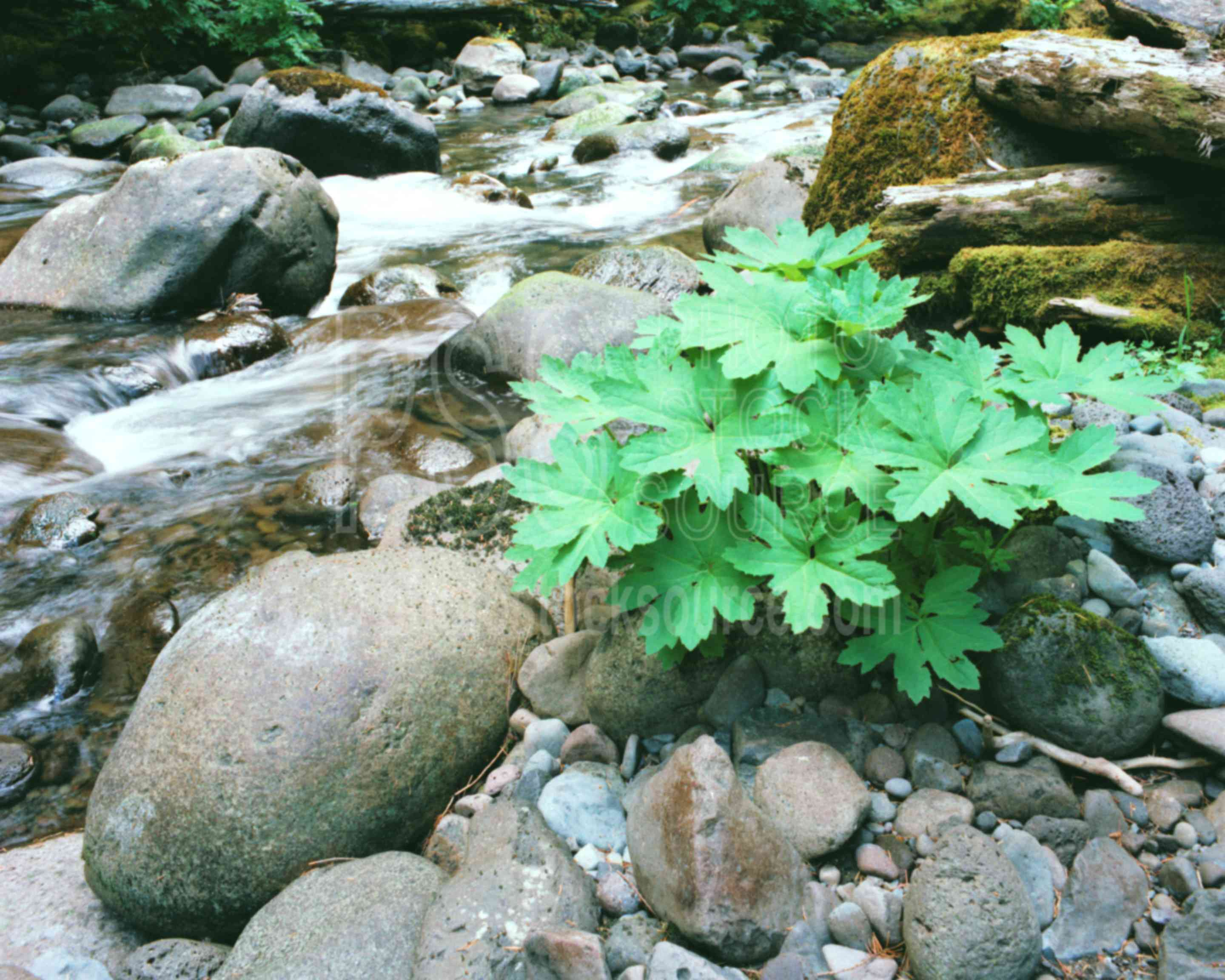 Rushing Water,creek,plant,stream,usas,plants