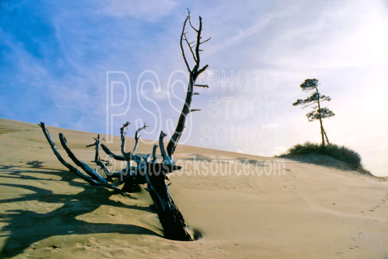 Sand Dune Island,dune,sand,sand dune,tree,usas,nature,seascapes,coast