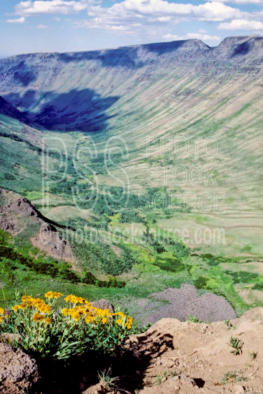 Kiger Gorge,flower,gorge,steens mt.,plant,usas,plants