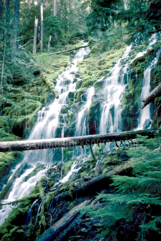 Upper Proxy Falls,falls,water,usas,nature,waterfalls