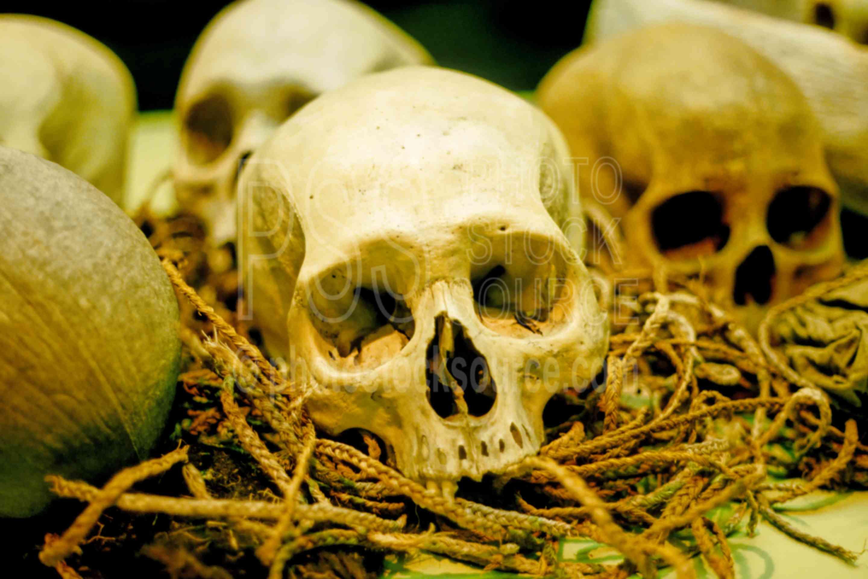 Skulls,bone,skull,burial,museums