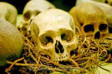 Photo of Skulls