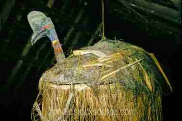Woven Cassowary
