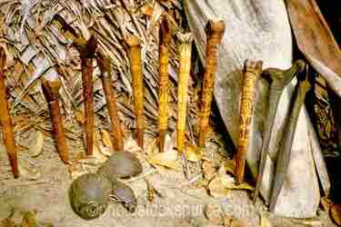 Photo of Bone Daggers