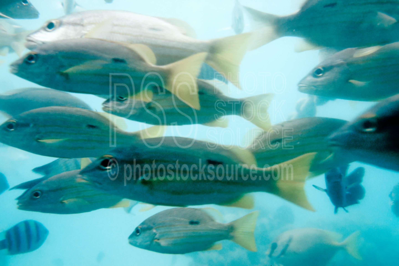Fish,