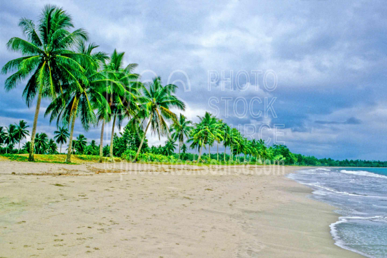 Palm Tree Beach,tree,jungle,palm tree,beach,waves,seascapes,coast