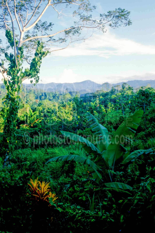 Jungle View,jungle,banana,prince alexander range