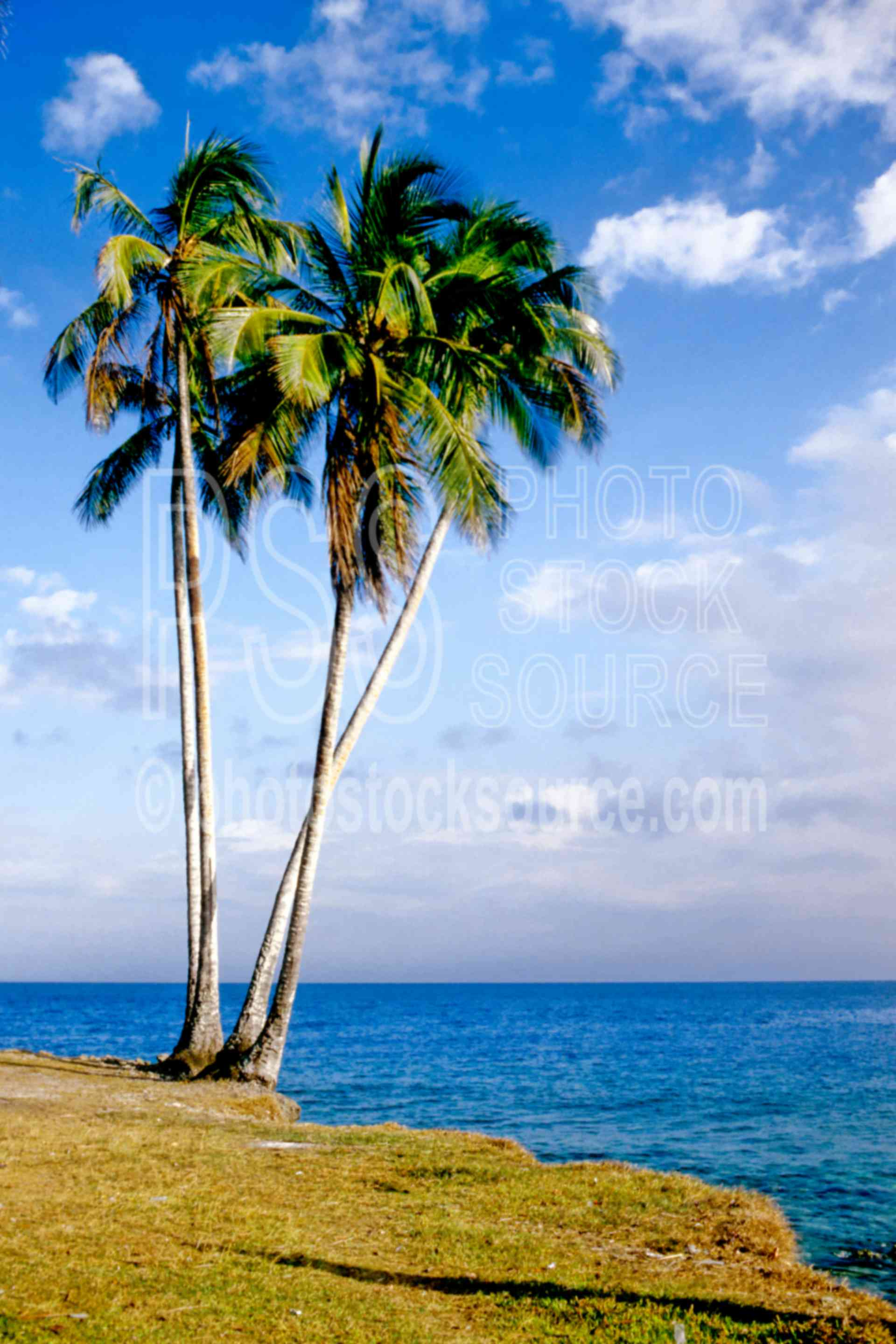 Palm Trees,palm,seas,shore,tree,water,seascapes,coast