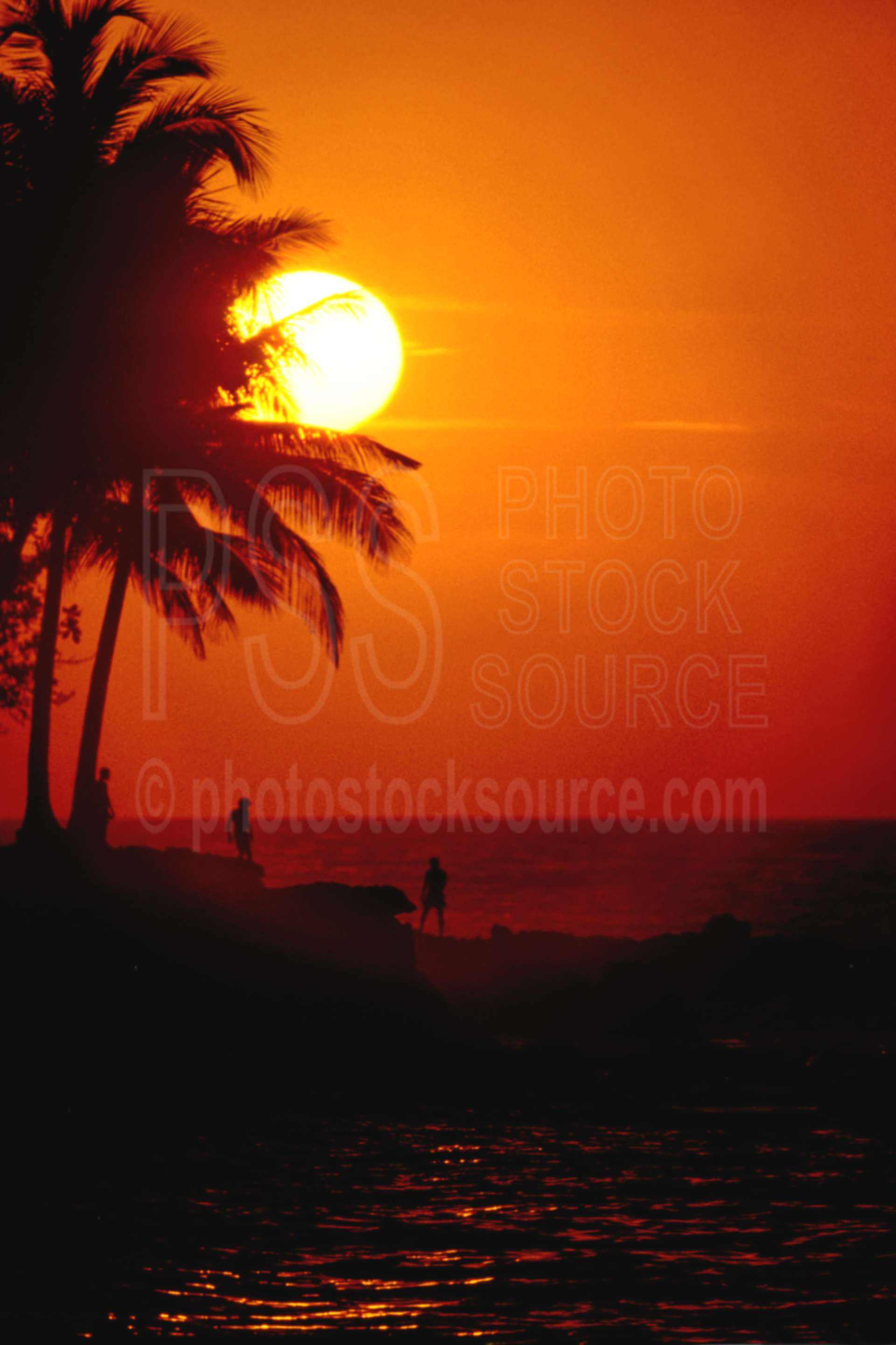 Sunset at Madang,ocean,palm,seas,sunset,trees,water,seascapes