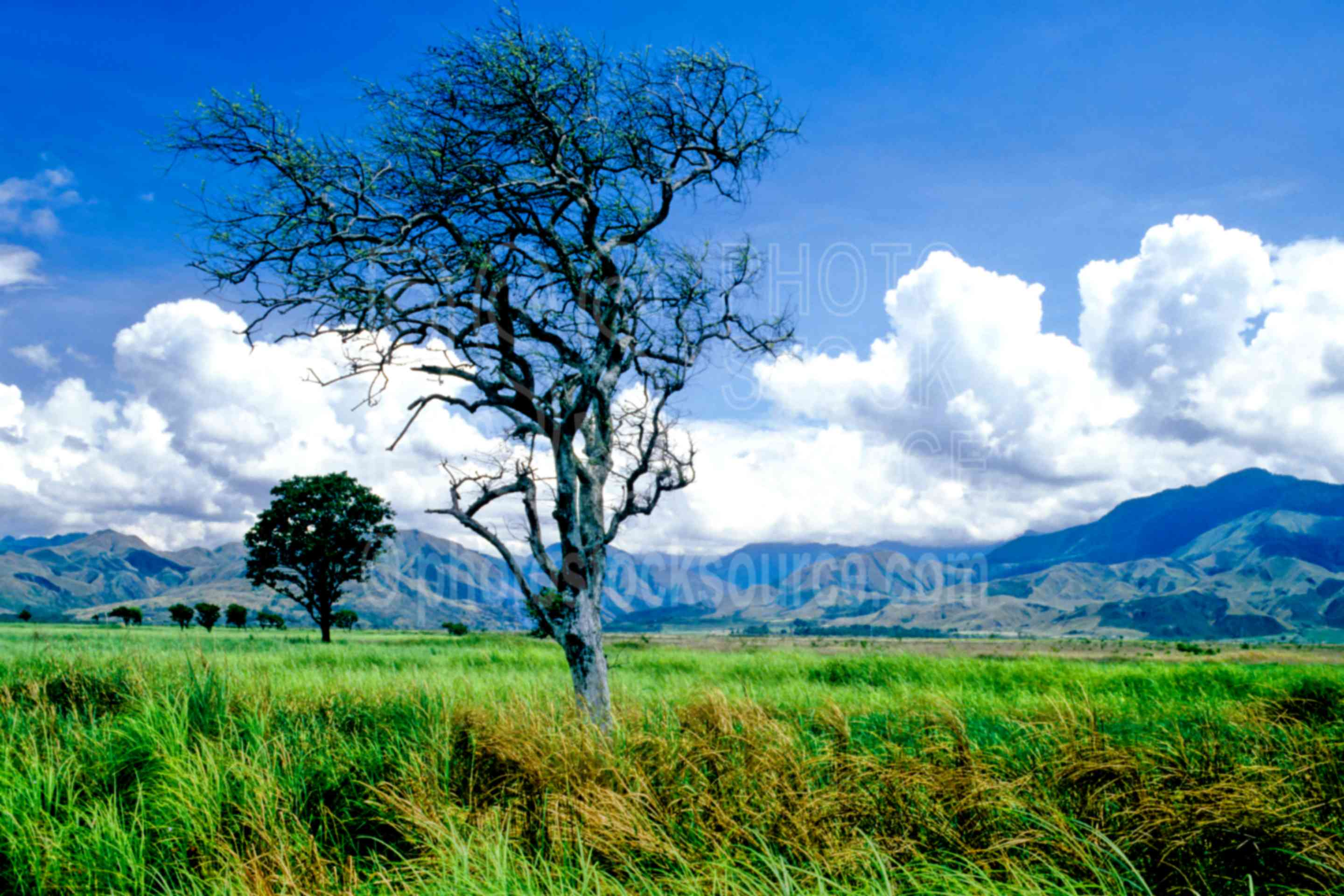 Grasslands,grass,tree,mountains