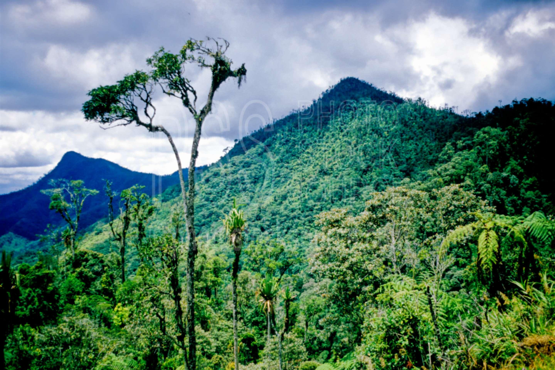Highland Jungle,highlands,mountain,jungle