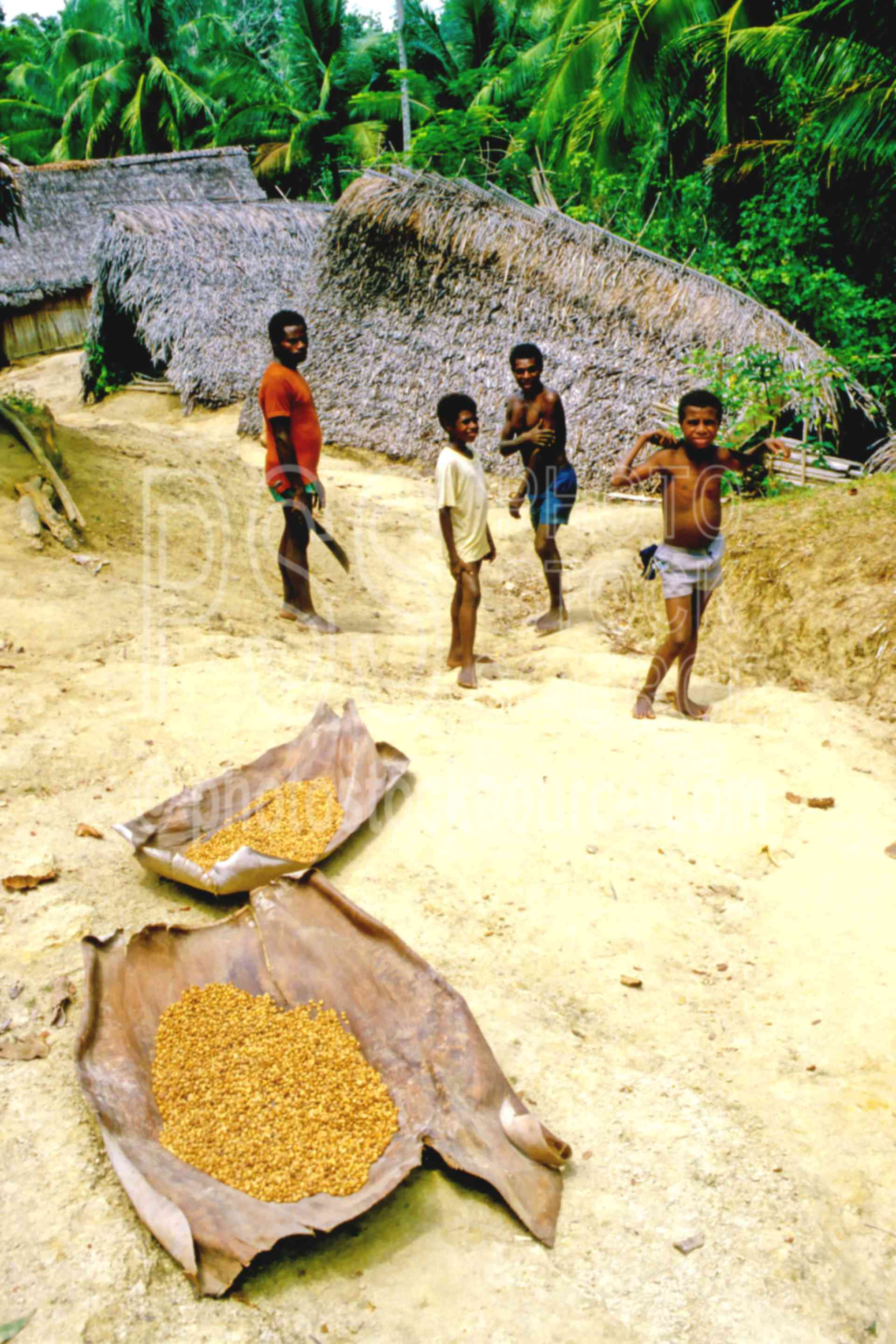 Drying Coffee,agriculture,beans,boys,coffee,huts,village
