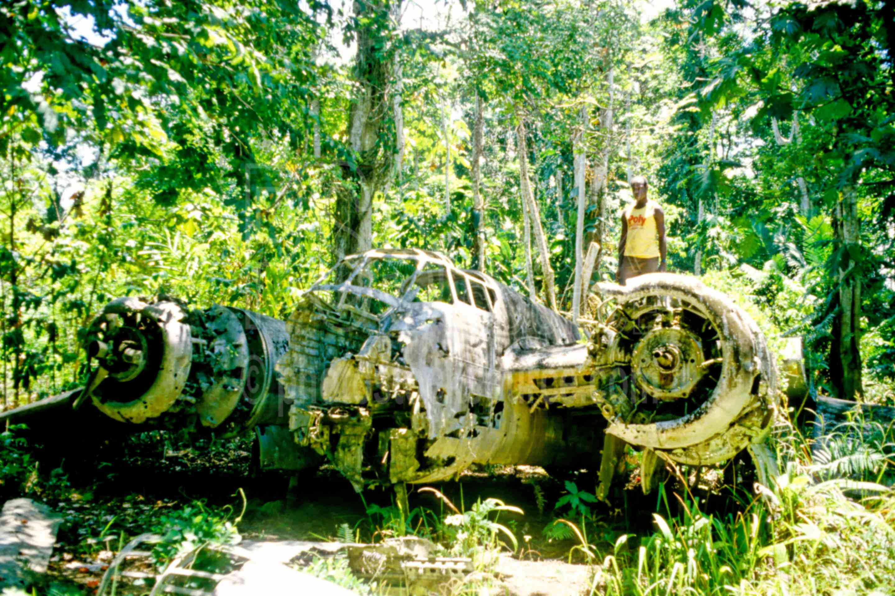Japanese Bomber,bush,jungle,nature,plane,wwii