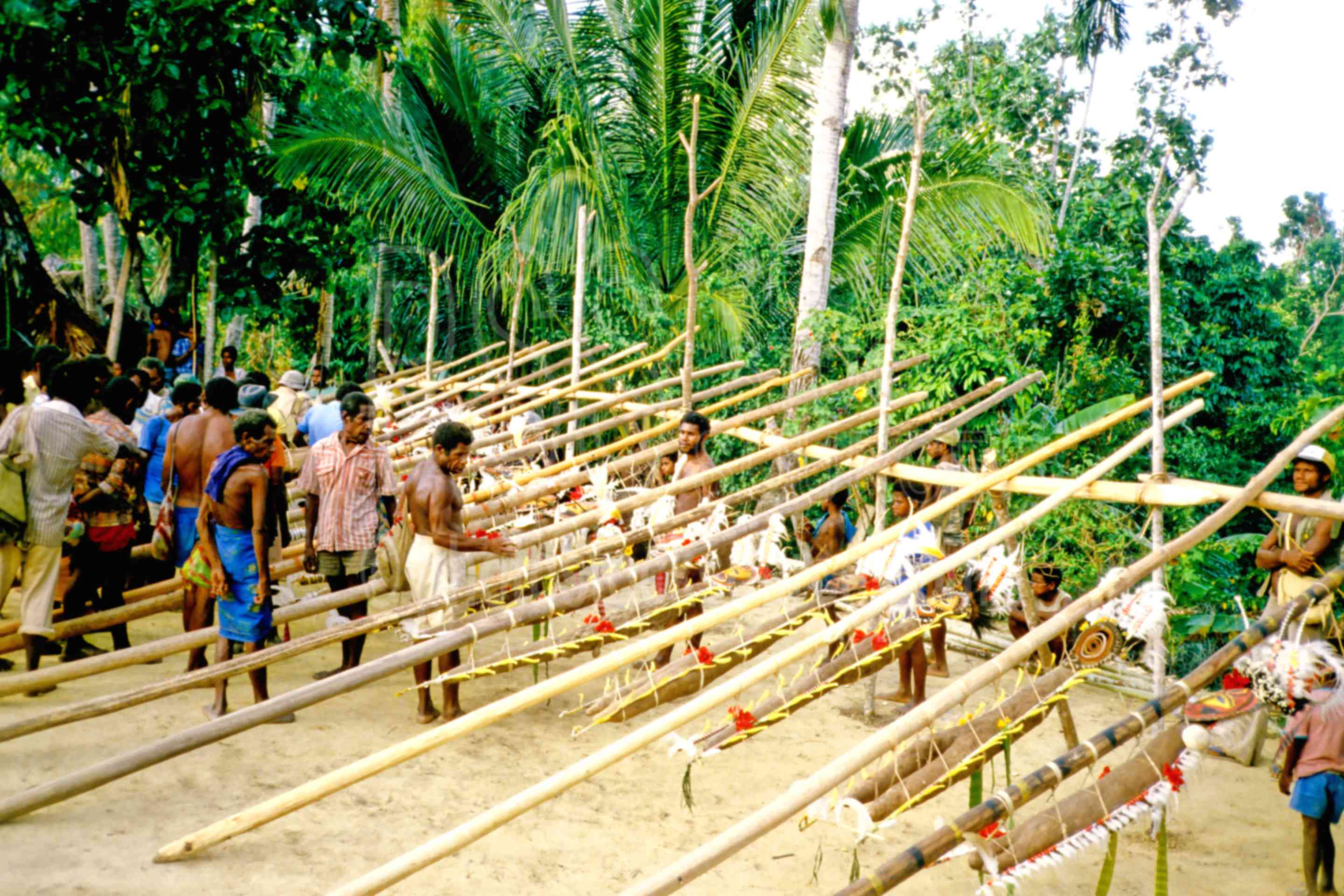 Yam Ceremony Preparation,ceremony,gathering,mens,yams,PNG ceremonies