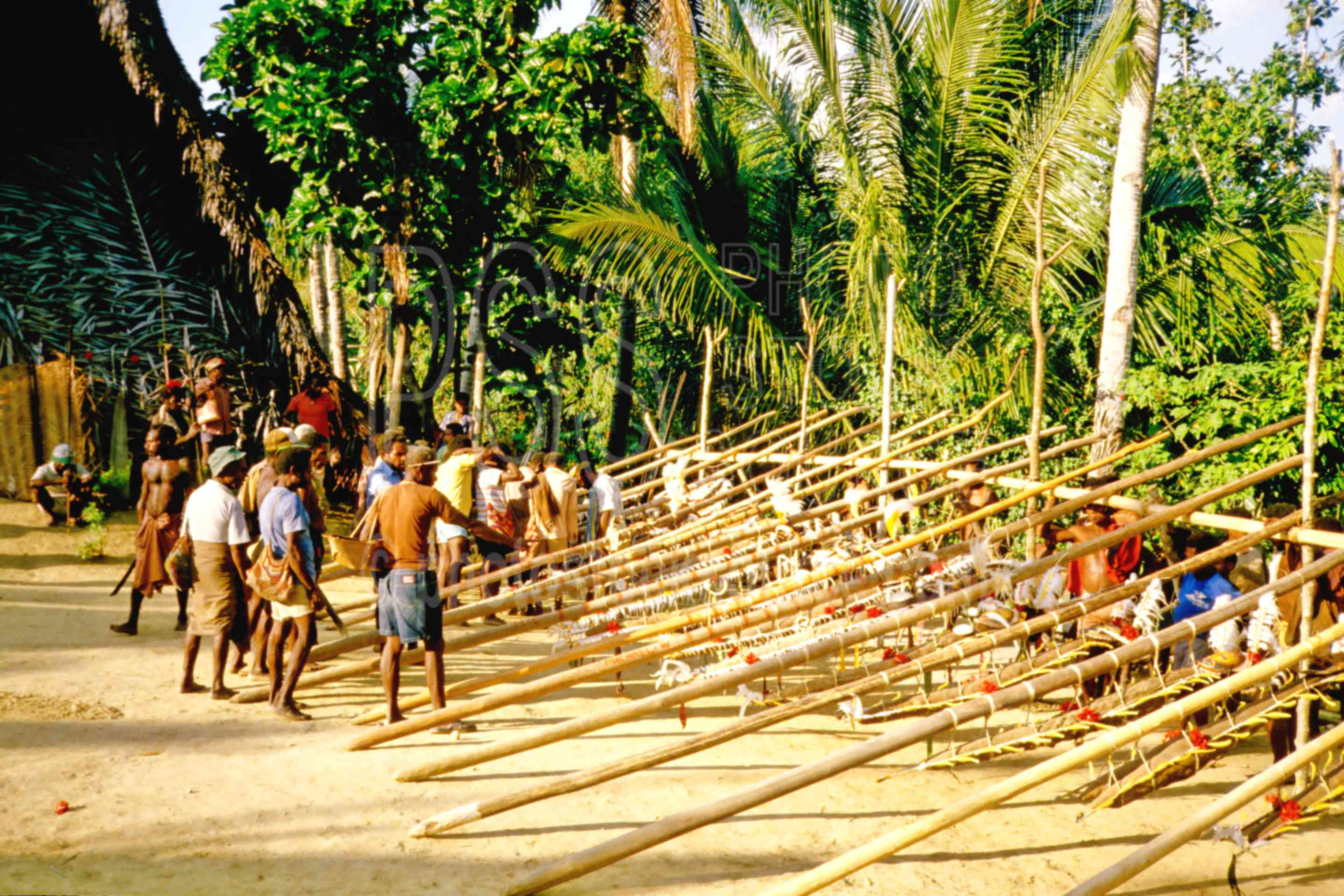 Yam Ceremony Preparations,ceremony,gathering,mens,yams,yam ceremony,PNG ceremonies