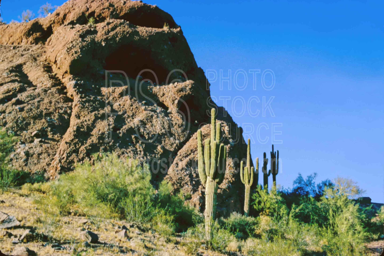 Saguaro Cactus,cactus,papago butte,papago park,plant,saguaro,desert,usas,plants,landscapes
