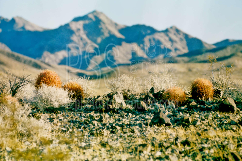 Cactus at Sunrise,cactus,sunrise,plant,desert,usas,plants