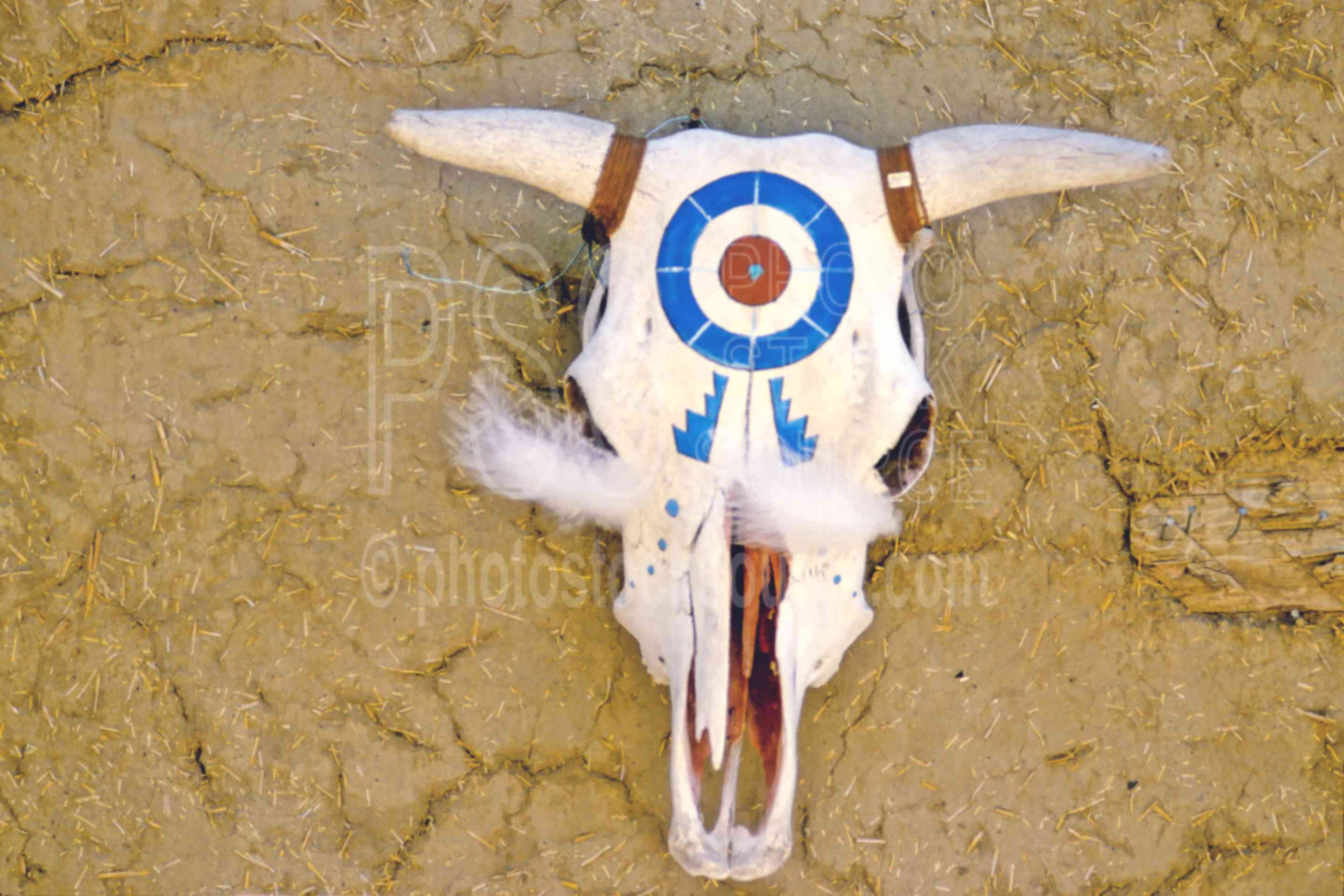 Painted Cow Skull,arts,painting,usas,native american