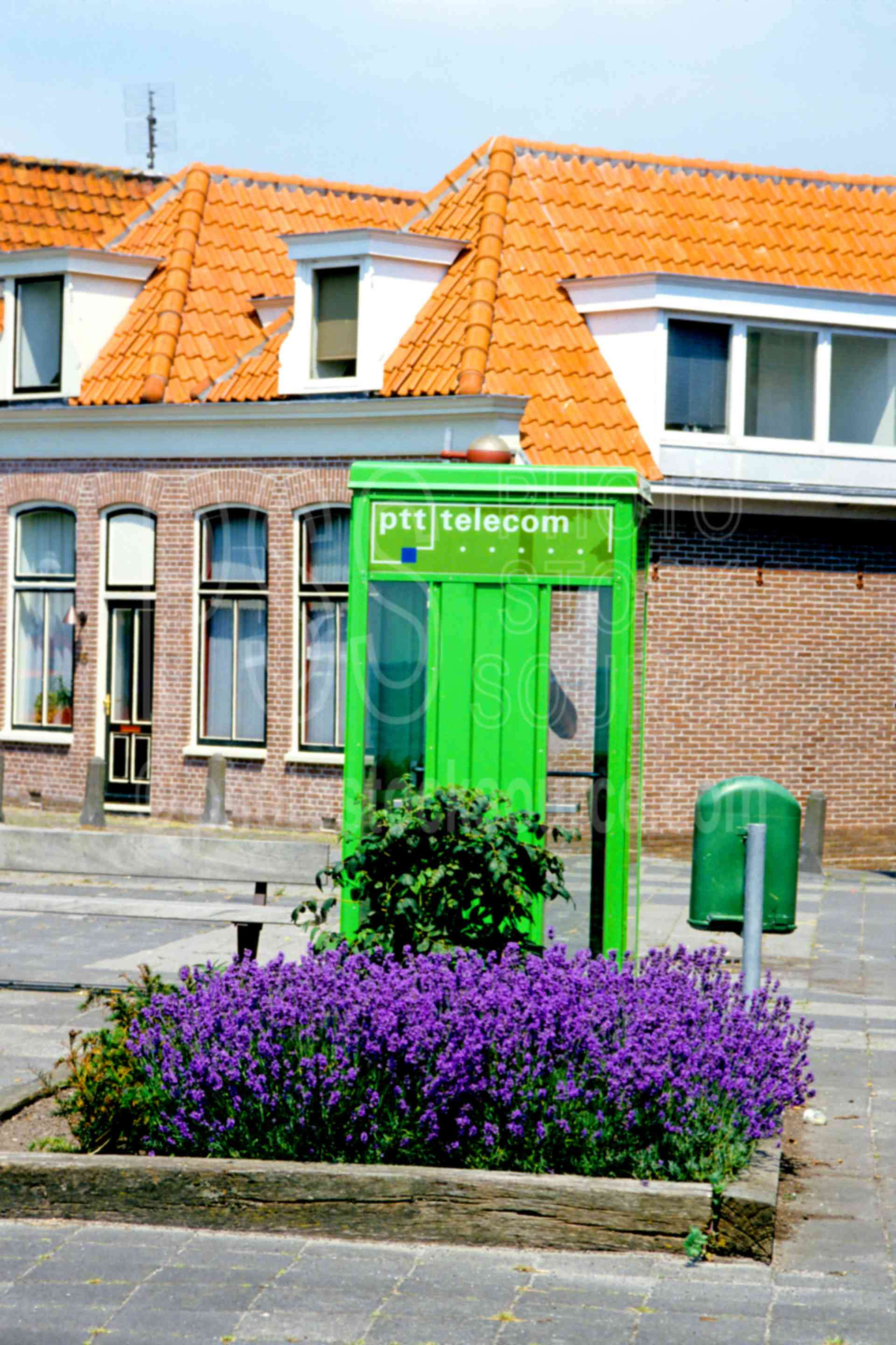 Dutch Phonebooth,dutch phone booth,europe,flower,holland,phone booth,plant,plants