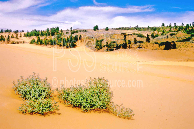 Sand Dune,dune,sand,usas,nature