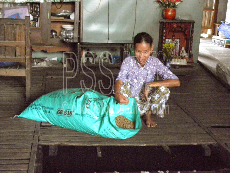 Woman at Fish Farm,boat,river,woman,business,industry,fish farm