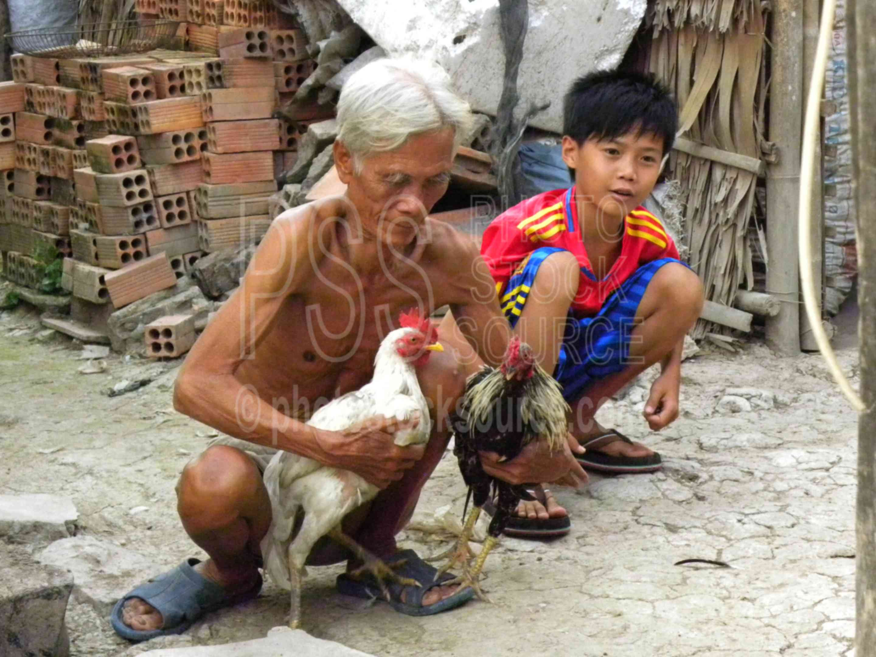 Photo of Cock Fighting by Photo Stock Source people, Thoi ... - photo#22