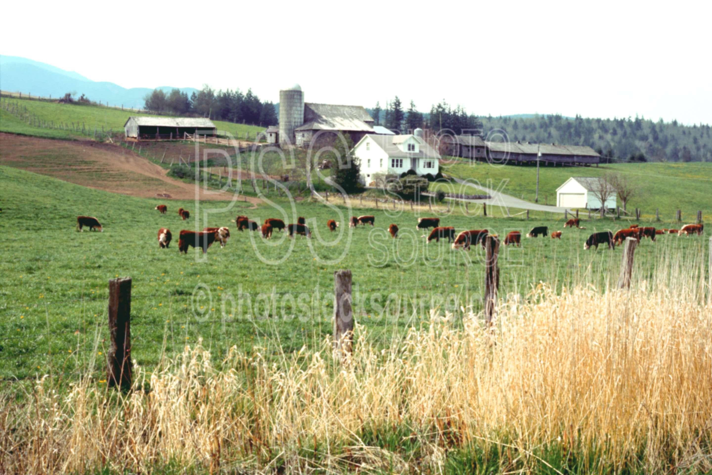 Dairy Farm,barn,cows,farm,field,house,silo,usas,barns,nature