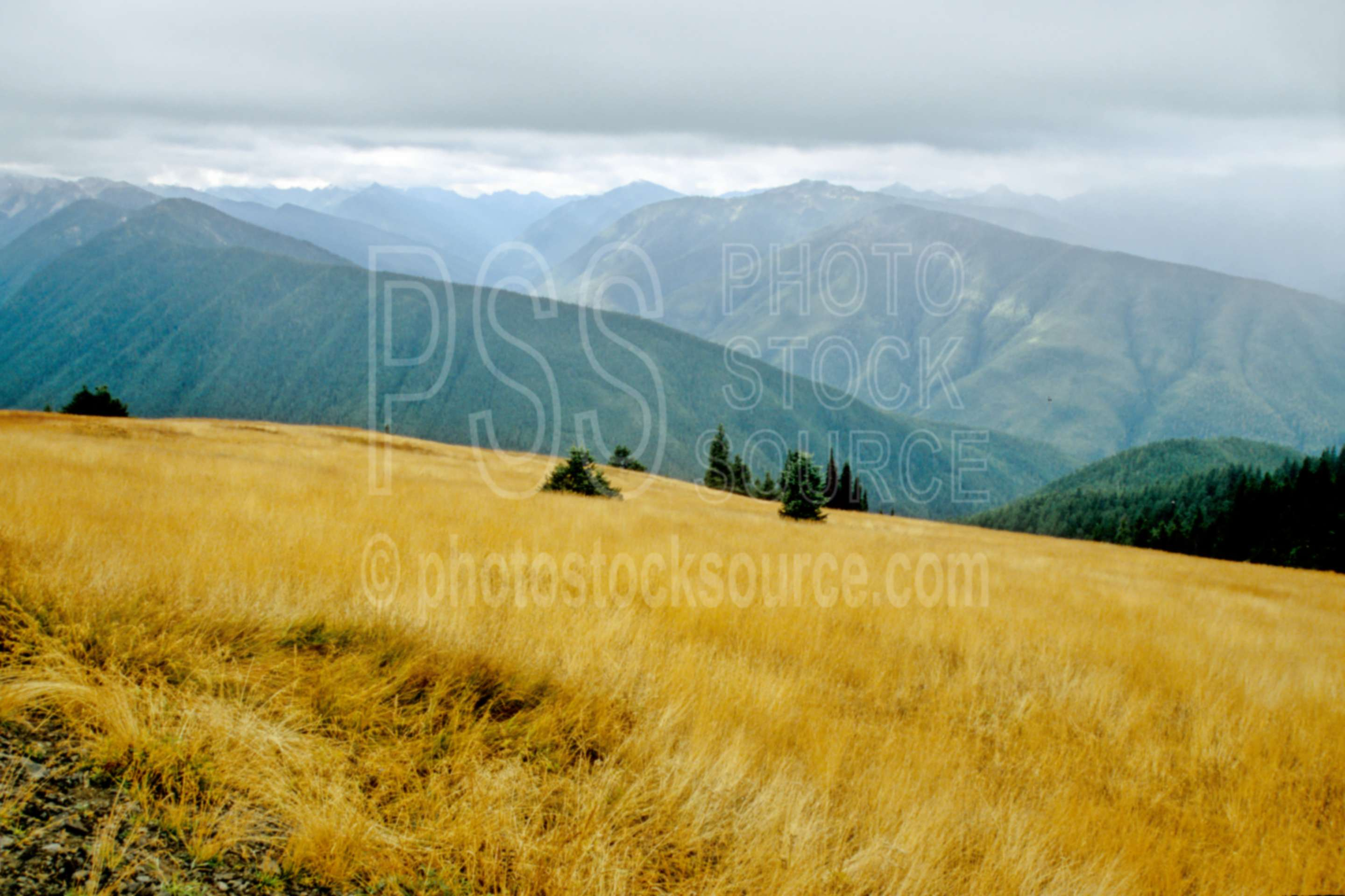 Hurricane Ridge,mt. olympus,olympic peninsula,usas,nature,mountains